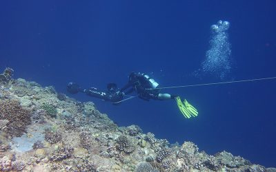 TMO PARTNERS WITH GCI FOR REEF SURVEY